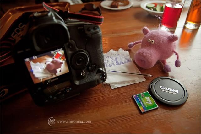 Journey of Sweeney the Pig (18 pics)