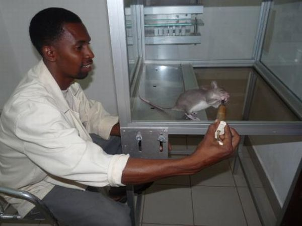 Landmines Aren't a Problem Anymore If You Have HeroRAT (10 pics + text)
