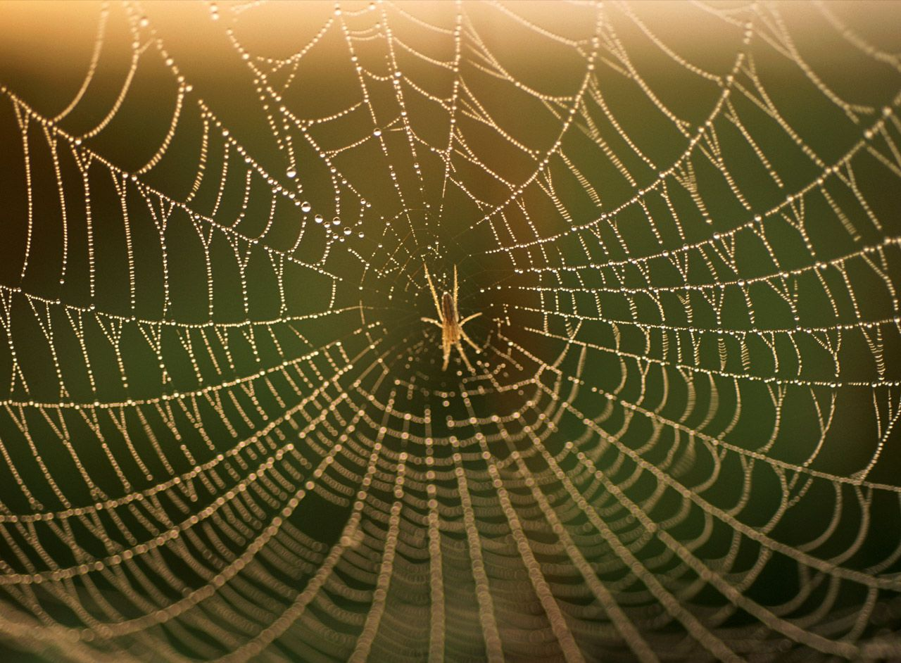 nature patterns pattern spider natural rhythm structures geographic national web repetition organic different izismile sustainable webs mod 2c example visit
