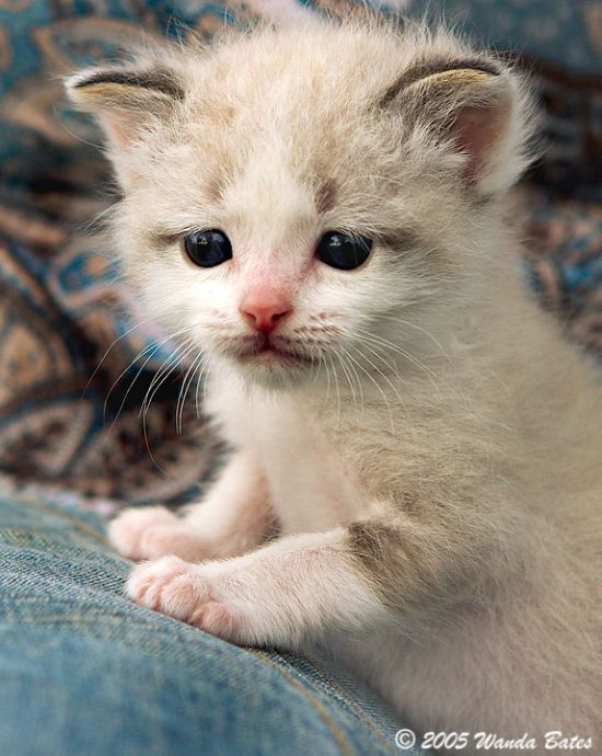 Cute Kitties (111 pics)