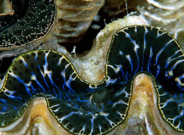 Beautiful Patterns in Nature from National Geographic. Part 2 (78 pics)