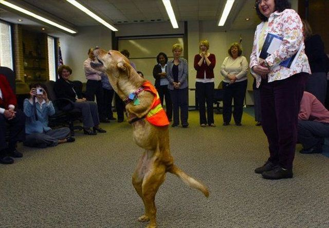 A Dog That Walks Like Humans (21 pics + 1 video)