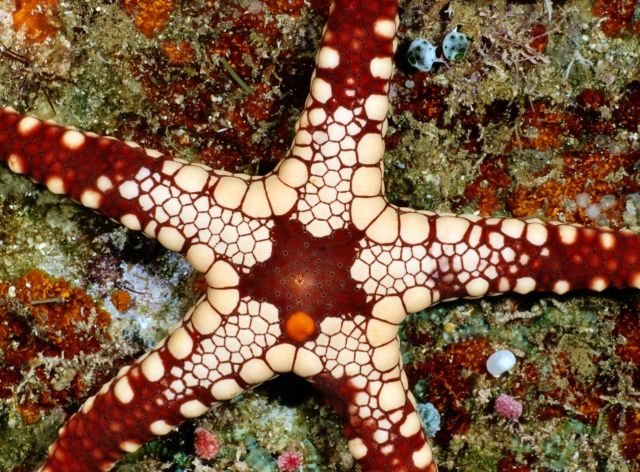 Beautiful Patterns in Nature from National Geographic. Part 3 (64 pics)