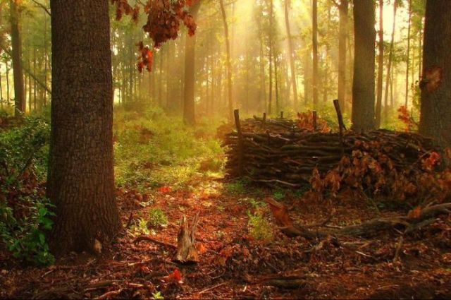 Beautiful Mysterious Forests (22 pics)