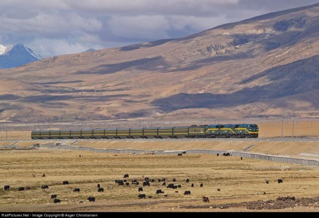 Train to the Roof of the World (59 pics)