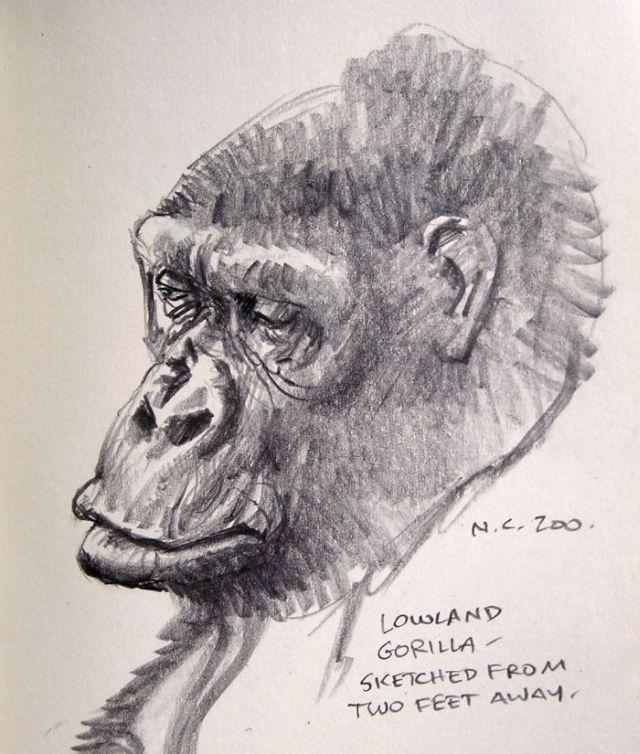 Gorilla and Chimpanzee Portraits (5 pics)