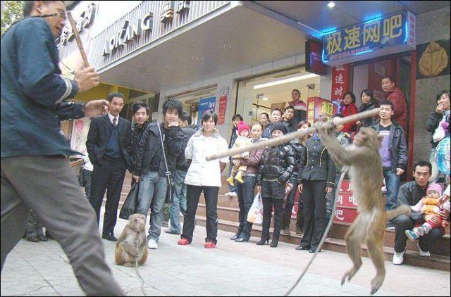 Kung-Fu Monkey (3 pics)