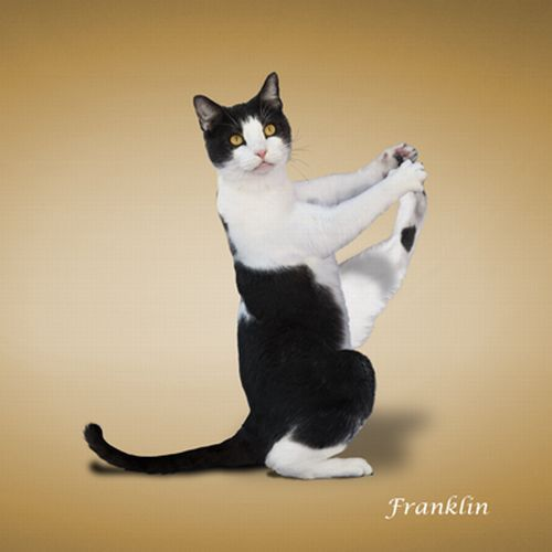 The 'Yoga Cats' 2010 Calendar (14 pics)