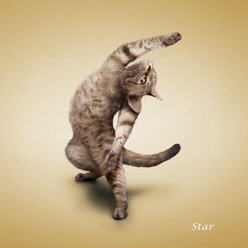 The 'Yoga Cats' 2010 Calendar (14 pics)