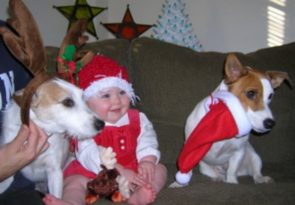 Animals In Santa Hats (100 pics)