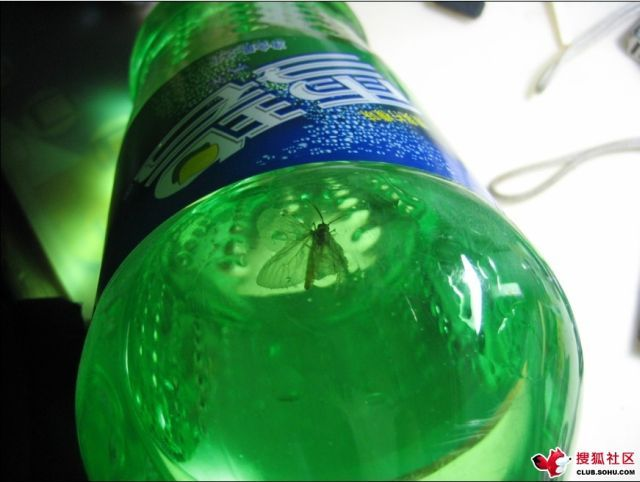 Do You Want Some Sprite? (8 pics)