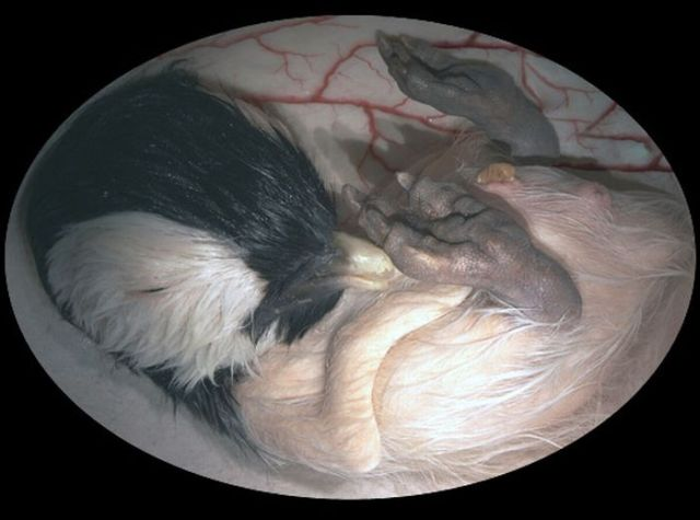Awesome Pictures of Unborn Baby Animals (15 pics)