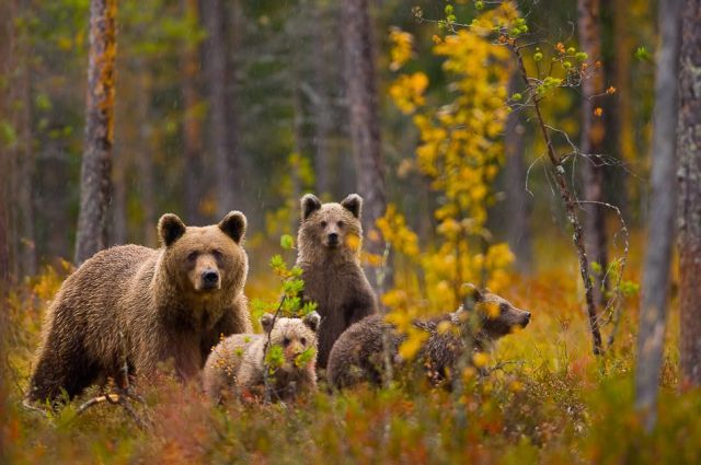 Cute Brown Bears (15 pics)