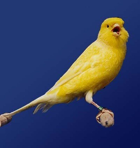Canary Costume. Way Too Hilarious (4 pics)