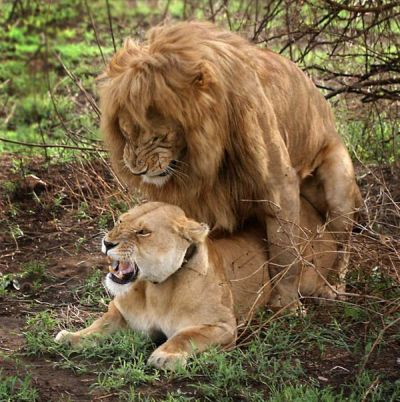 TOP 10. The Most Popular Posts of 2009 in Category ANIMALS