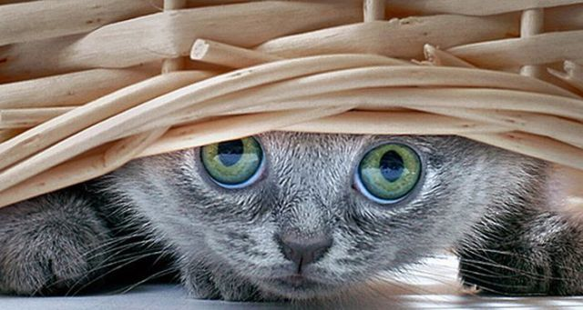 These funny little animals (70 pics)