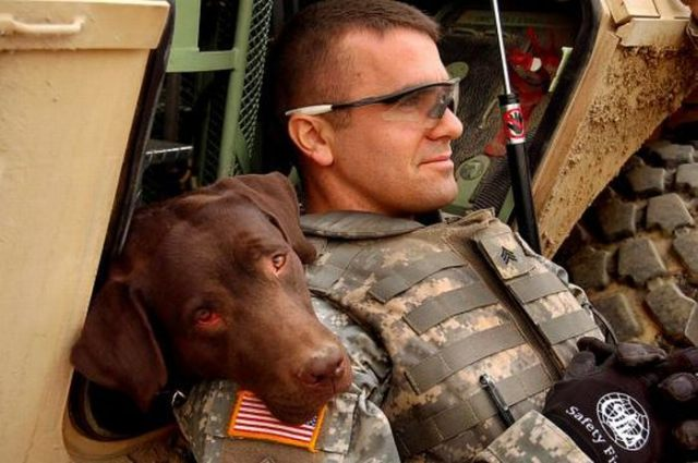 Dogs in Army (21 pics)