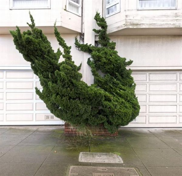 Interesting Tree Design (14 pics)