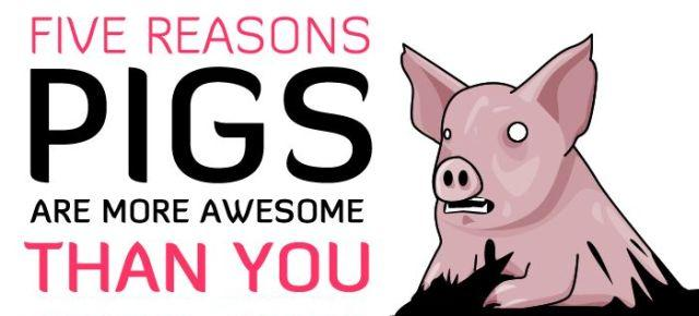 Five Reasons Pigs Are More Awesome Than You (7 pics)