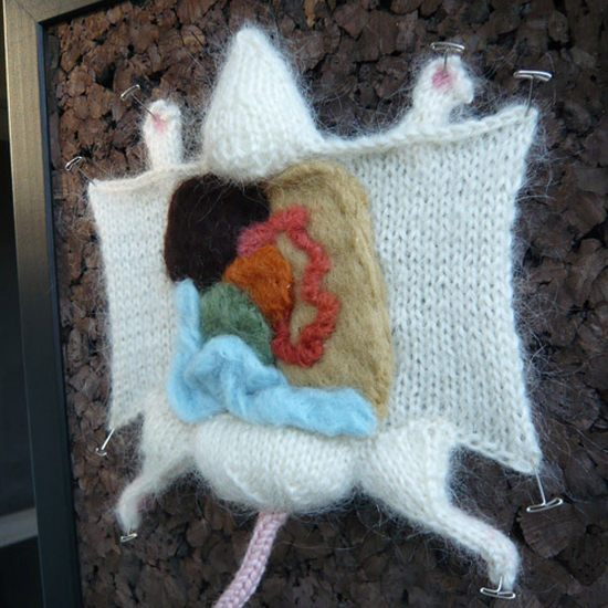 Knitted Animal Dissection (17 pics)