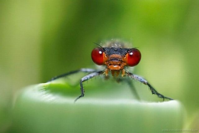 Macro Photography of Insects (62 pics)