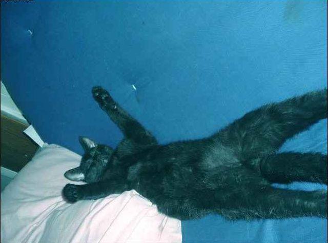 The Laziest Cat Ever (4 pics)