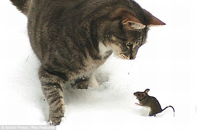 The Real Tom and Jerry (5 pics)
