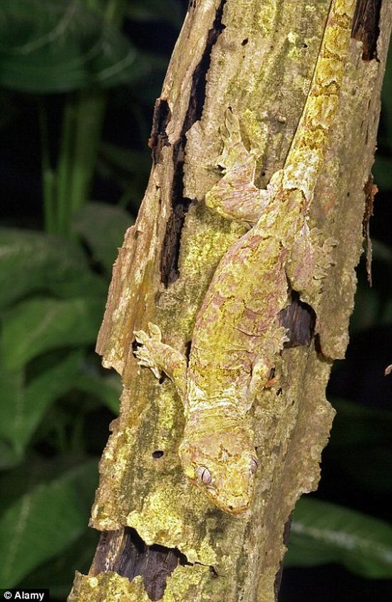 Art of Camouflage in the Animal World (22 pics)