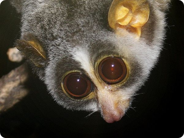 Strangest and Rarest Animals (60 pics)