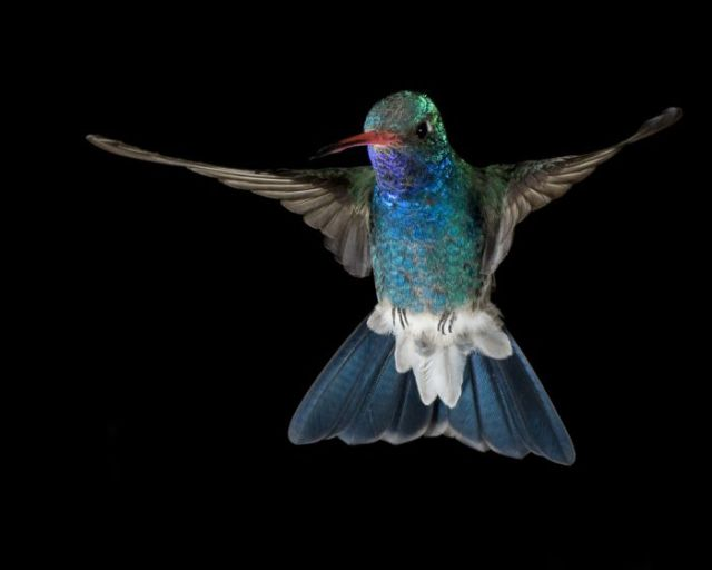 Great Collection of High Speed Photography (102 pics)