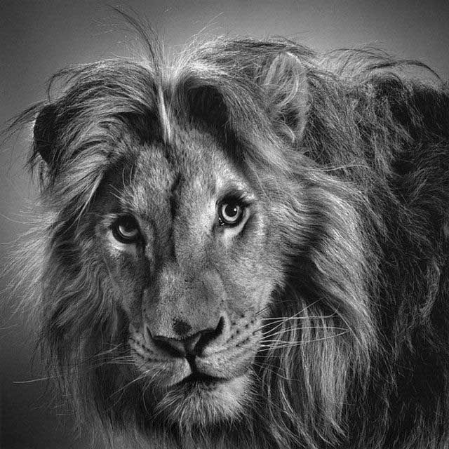 Great Pencil Drawings (39 pics)