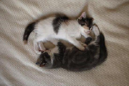 Brother and Sister (17 pics) - Izismile.com