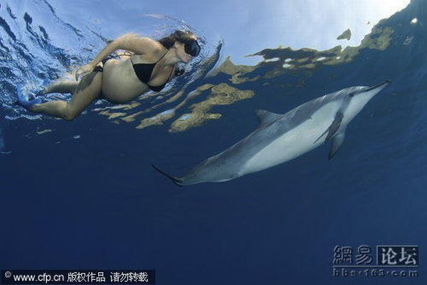 Pregnant Woman Swimming among Dolphins (5 pics)