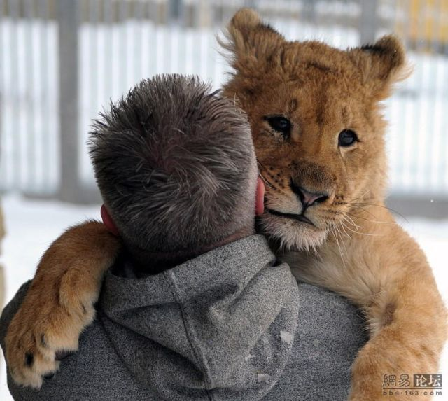 Positive Emotion of the Day. True Friends (9 pics)