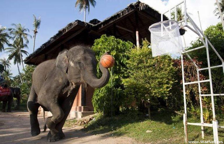 Basketball and Emergency Elephants (16 pics)