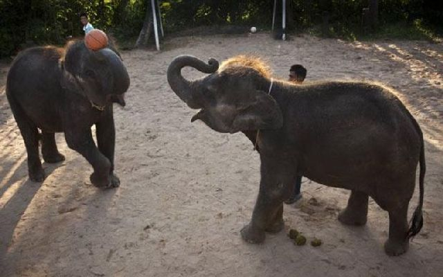 Basketball and Emergency Elephants (16 pics)