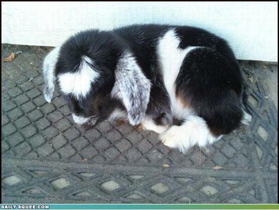 Cutest Animal? (103 pics)