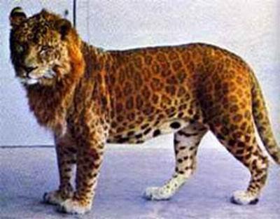 Hybrid Animals (20 pics)
