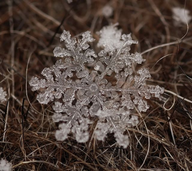 The Wonders of Winter (26 pics)