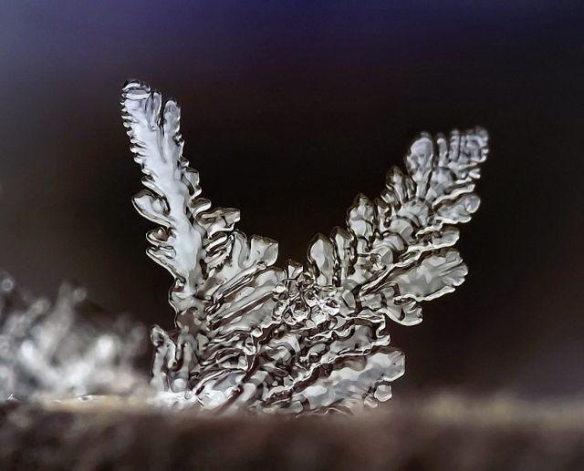 The Wonders of Winter (26 pics)