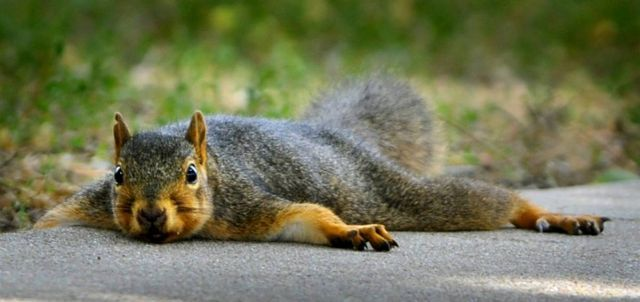 Best Animal Pictures for 2009 According to MSNBC (62 pics)