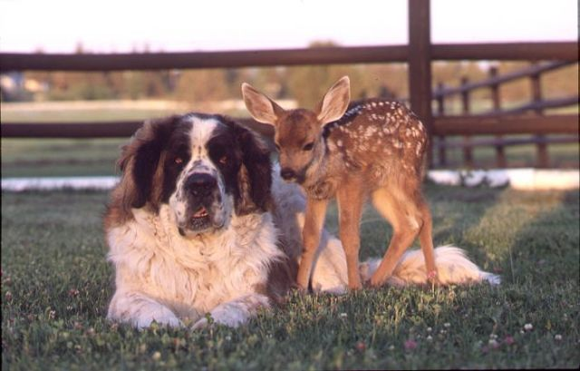 Best Buddies but Yet So Different (50 pics)