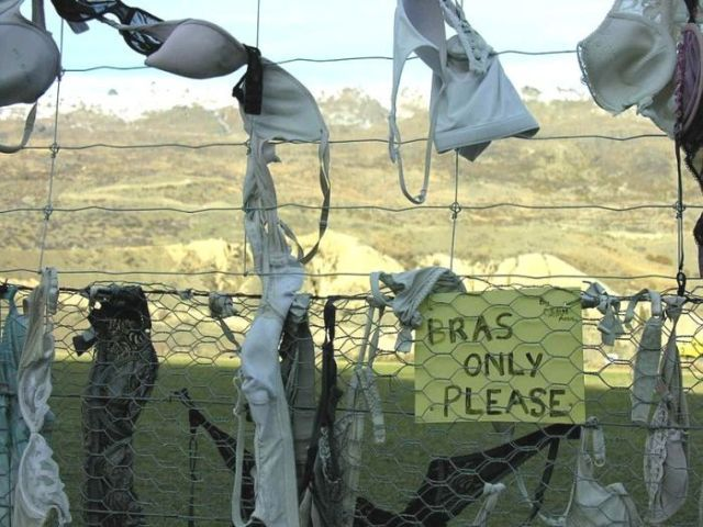 Have You Ever Been Asked To Donate Your Bra? (9 pics)