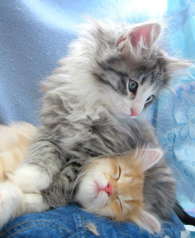 Silly Kittys (142 pics)