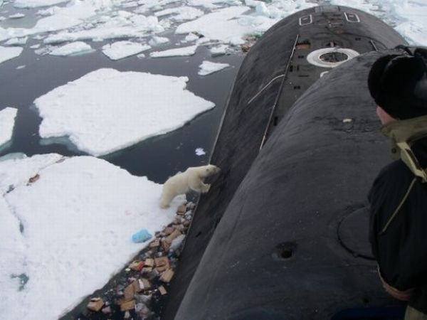 Polar Bears Prefer Bread, Who Knew? (5 pics)