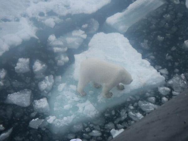 Polar Bears Prefer Bread, Who Knew? (5 pics)