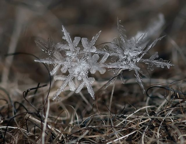 The marvels of Winter (26 pics)