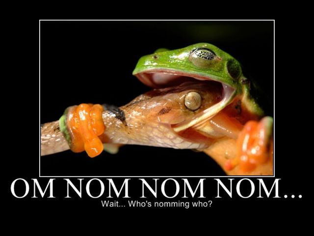 Funny Series of Nom Nom Nom. Part 2 (33 pics)