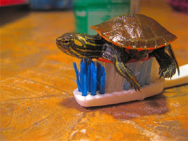 The Not So Boring Life Of Baby Turtles (15 pics)