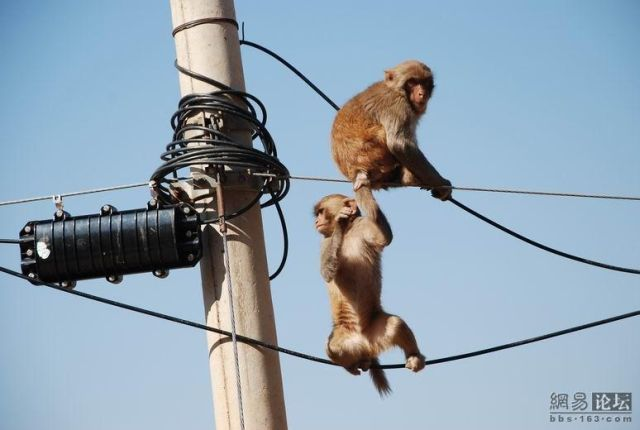 Monkey Business (11 pics)